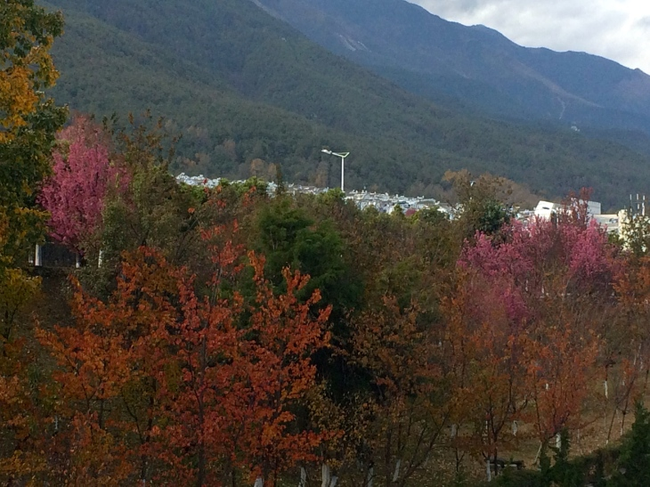 Fall colors (and cherry blossoms) from our classroom window.